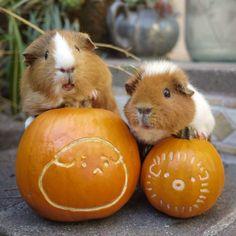 Piggy Halloween