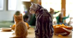 Cat Tries To Figure Out The Infamous Coat Pile In This Hilarious 'Dear Kitten' Video | The Animal Rescue Site Blog