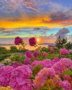 Nature Photography, Travel Photography, Beautiful Photos Of Nature, Beautiful Scenery, Flower Landscape, Double Tap, Beautiful Gardens, Sunrise, Flowers