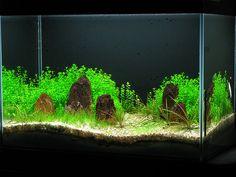 Aquarium Store, Aquarium Setup, Nature Aquarium, Aquarium Design, Planted Aquarium, Aquarium Ideas, Aquascaping Plants, Goldfish Aquarium, Shrimp Tank