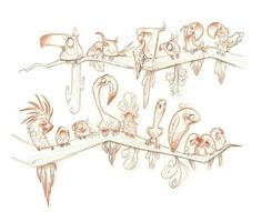 Uccelli paradiso