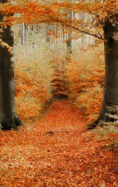 autumn   by Detlef Knapp on 500px