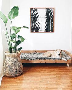 Ideas para integrar los objetos de nuestras mascotas en la decoración de la casa