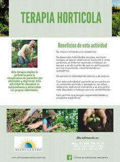Terapia Horticola, conoce mas de esto.   www.clinicareencuentro.com.mx