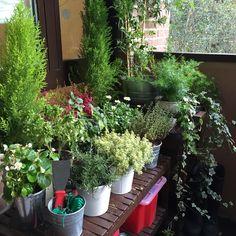 My back yard - Mi patio trasero