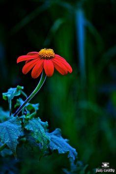 vvv Late Summer Farmers Garden by Jim Crotty 7.jpg