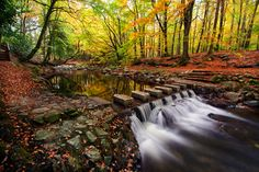 Tollymore Stepping Stones by Stephen Emerson on 500px