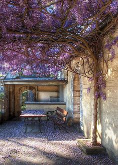 Trained wisteria vines to create a shade shelter