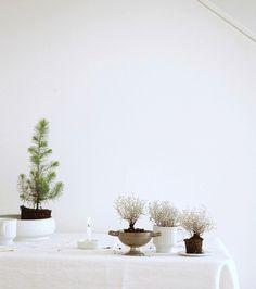 Vintage plant pots   photo: Sabine Wittig