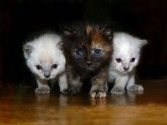 Cute kittens - 98 Pictures (47)