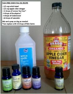 Natural Flea Treatment for Dogs Many commercial flea treatments are made of harsh and sometimes toxic chemicals. There are some natural alternatives. This is a guide about natural flea treatment for dogs. Flea Spray For Dogs, Flea And Tick Spray, Flea Bath For Dogs, Flea Shampoo For Dogs, Dog Flea Remedies, Flea Remedy For Dogs, Natural Remedies For Fleas, Itching Remedies, Homemade Flea Spray