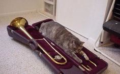 Fluffy the Cat Trombonist waits in vain for a phone call for a gig.  Dire circumstances have forced Fluffy to sleep in his case.