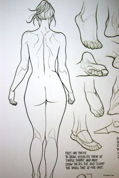 Character Design Collection: Female Anatomy