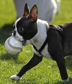 Play Ball! Todays Cuteness,for the Dog Lovers:) by Charles Rieldel.