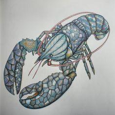 Claude the blue lobster #colouring #adultcoloringbook #milliemarotta #milliemarottasanimalkindom #lobster #blue #crayonbitches #nevertooold #yesiwork