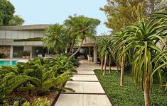 Zâmias com seixos rolados na base, palmeiras-fênix, aloe-das-dunas e grama-preta-anã formam este caminho para entrada um verdadeiro deleite! Projeto de autoria do paisagista Luiz Carlos Orsini
