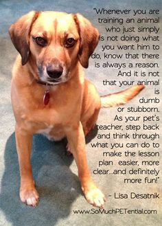 lessons learned for dog training success
