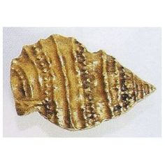 Emenee Decorative Hardware  Pointed Seashell Cabinet Knob