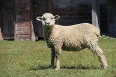 Contando ovejas Fotografía: Alejandro Villavicencio