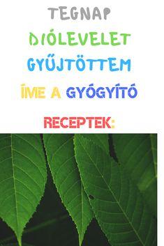 Plant Leaves, Medicine, Anna, Plants, Plant, Medical, Planets