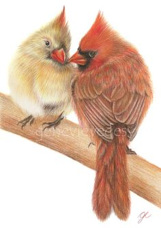 Reproduction d'un dessin de cardinaux Cardinaux mâle et