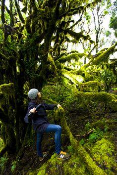 Rainforest of La Gomera, Canary Islands / La jungla de La Gomera, Islas Canarias