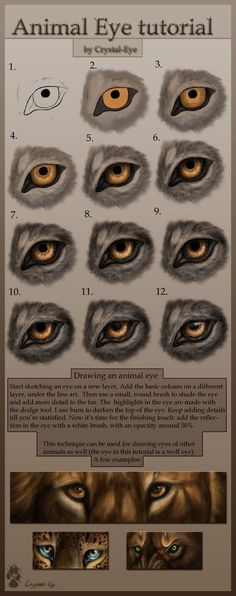 Animal eye tutorial
