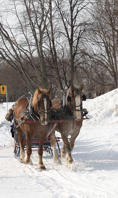 A horse drawn sleigh ride, just one of the fun winter activities you can do at Quebec's Winter Carnival. www.casualtravelist.com