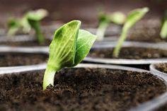 160 milioni per le #imprese agricole con Generazione Campolibero: mutui agevolati e fondi per le #startup