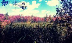 #photography #inspiration #outside #marsh #trees #seaside #seagrass #murphyempiredesign #grass #coast #coastofmaine #maine #maineimages #images #mainecoast #autumn #capeelizabeth #leaves #october