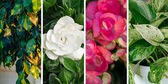 Rose, Flowers, Plants, Balcony, Beauty, Gardening, Pink, Lawn And Garden, Balconies