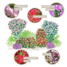 comment bien associer la plante du mois hortensia you me. Black Bedroom Furniture Sets. Home Design Ideas