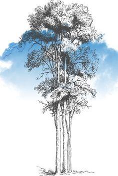 Landscape Drawing Tutorial, Landscape Sketch, Landscape Drawings, Tree Drawings Pencil, Ink Pen Drawings, Nature Sketch, Nature Drawing, Bonsai Tree Tattoos, Tree Sketches