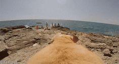 Dog GoPro Sea Beach Funny