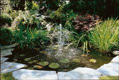 fotos de estanques para lirios acuaticos | Plantas para estanques | ESTANQUES.net
