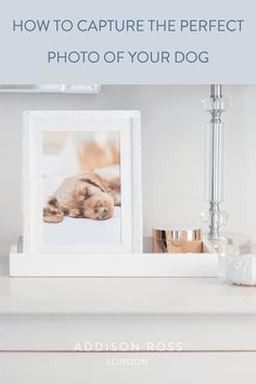 Learn to take professional quality photos of your dog, with these pro tips on how to capture the perfect doggy portrait. #addisonross #photgraphytips #animalphotography #betterphotography Fluffy Puppies, Silver Frames, Work With Animals, Jewellery Boxes, Tidy Up, Perfect Photo, Luxury Gifts, Modern Interior, Special Gifts