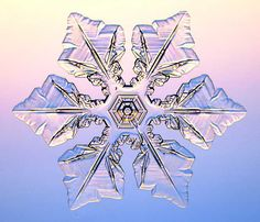 Real Snowflake Pictures | Real Snowflakes