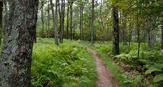 Ship Rock Ridge Hike > Day Trips > nyc harriman state park