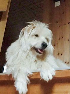 Dogs, Animals, Doggies, Animais, Animales, Animaux, Animal, Pet Dogs, Dog