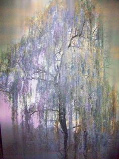 Weeping Willow - Digital Paint