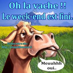 Ho la vache, le weekend est fini. Quotes Francais, New Week Quotes, Le Weekend, French Language Lessons, Morning Humor, Caricature, Good Morning, Jokes, Animation