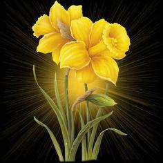 Flores - Mensagens para Facebook