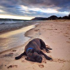 Great Lakes Beaches to see: Empire Beach in Michigan Midwest Vacations, Michigan Vacations, Michigan Travel, Lake Michigan, Vacation Trips, Vacation Spots, Lake Beach, Dog Beach, Hawaii Beach
