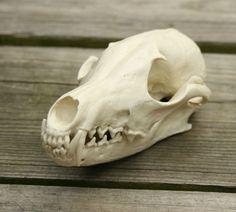 fox skull replica by skullery on Etsy, $29.00