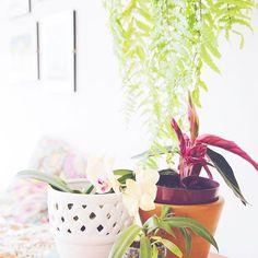 """Na casa da @crisnogueira , as plantas tem vida própria 🌿""""Adoro arranjo com movimento, folhagem vindo de cima. Nada muito combinando!"""" A gente também 💛 tudo da casa cheia de tropicalismo e aconchego dela. 📸 @yullinakamura #iLoveeRio #SummerStories . . . #natureza #natural #flor #flores #amor #foto #like #instagood #equilibrio #harmonia #instamood #lindo #beautiful #amazing #decor #decoração #decoration"""
