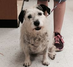 Daschie is a sweet 5-year-old Terrier mix who weighs 24 pounds. She gets along well with other dogs, and is reported to be housetrained. She loves car rides, is fabulous with kids, but needs a cat-free home. The $100 adoption fee helps to cover spay/neuter services, vaccinations, microchip, deworming, flea treatment, Heartworm test, vet check, transportation to rescue, quality food/care, and 30 days of pet health insurance. Go to www.petswithoutpartners.org.  Go to www.redding.com for more…
