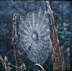 For an astrophysicist, perhaps the most amazing aspect of spider webs is how much they resemble computer simulations of the cosmic web -- the filament. Spider Silk, Spider Art, Spider Webs, Cosmic Web, Charlottes Web, Amazing Spider, Graphic, Illustration, Weaving