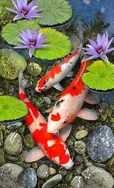 Art Koi, Fish Art, Fish Fish, Koi Fish Drawing, Fish Drawings, Lily Pad Drawing, Koi Fish Pond, Fish Ponds, Betta