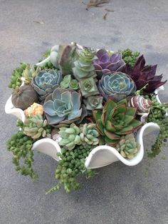 Very clever. Use a shell for your succulent garden. Put in on your patio or even inside on your table as a centerpiece. Repinned by www.sailorstales.wordpress.com