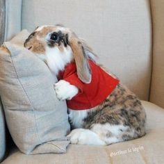 just like my Leo 💖 Cute Baby Bunnies, Funny Bunnies, Cute Little Animals, Cute Funny Animals, Amor Animal, Bunny Care, Pet Rabbit, Cute Animal Pictures, Animals Beautiful